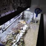 『海水水槽の水換え』頻度や方法、その効果など…