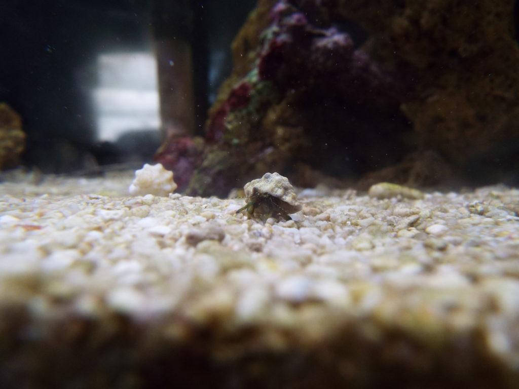ワイルド貝殻