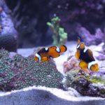 海水生物/飼育方法一覧