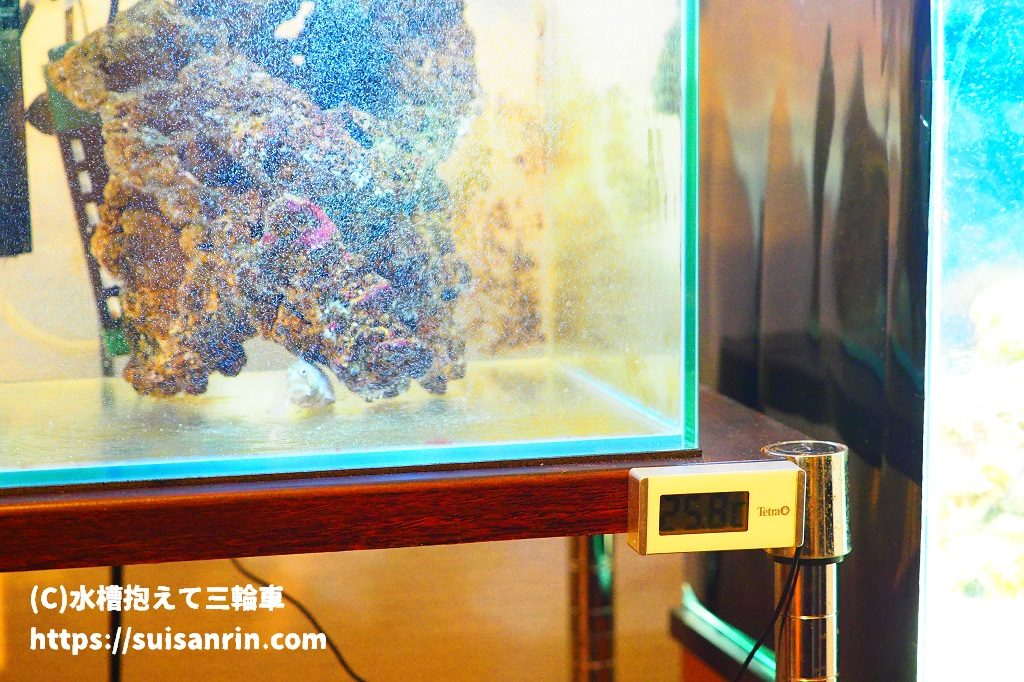 デジタル式水温計設置