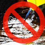 水槽の『水換え不要』に注意!「水換え頻度が減る=楽」ではない…という話