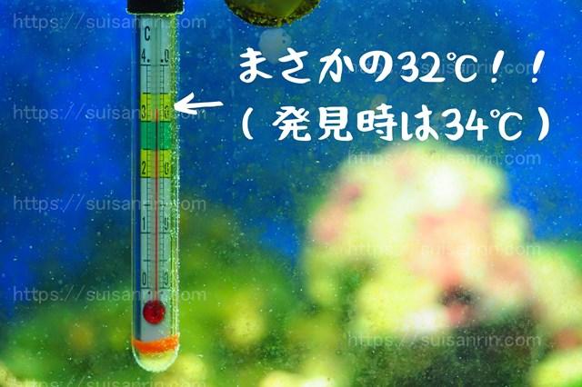 水温異常上昇
